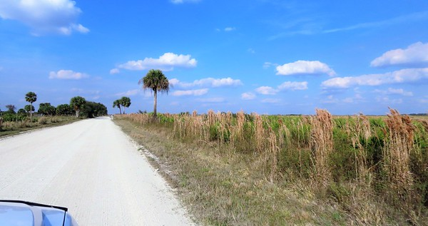 Kissimmee Prairie Preserve SP, FL (4)