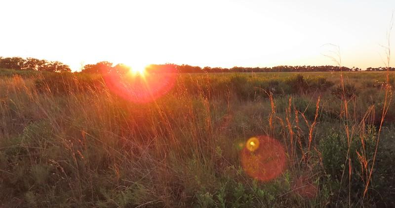 Kissimmee Prairie Preserve SP, FL (15)