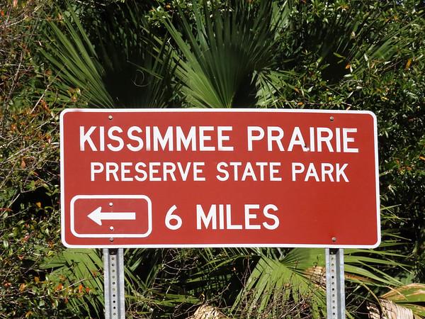 Kissimmee Prairie Preserve SP, FL (8)