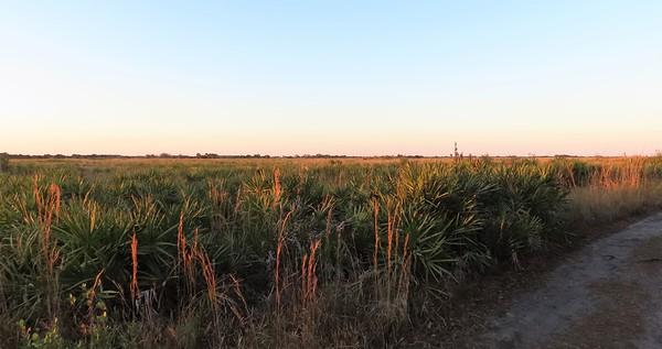 Kissimmee Prairie Preserve SP, FL (14)
