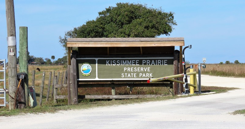 Kissimmee Prairie Preserve SP, FL (2)