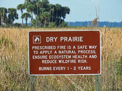 Kissimmee Prairie Preserve SP, FL (5)