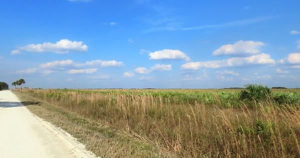 Kissimmee Prairie Preserve SP, FL (3)