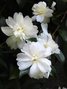 Blue Ridge Parkway Floral, NC (2)
