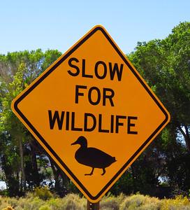 Slow for Wildlife