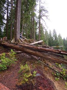Ohanapecosh Cpgr  (Mt  Rainier NP, WA) (19)