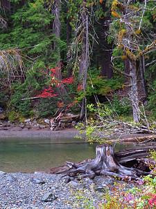 Ohanapecosh Cpgr  (Mt  Rainier NP, WA) (18)