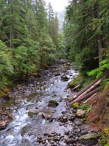 Ohanapecosh Cpgr  (Mt  Rainier NP, WA) (12)