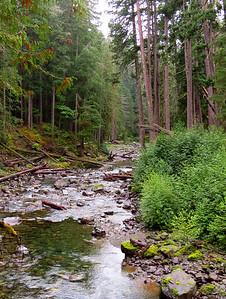 Ohanapecosh Cpgr  (Mt  Rainier NP, WA) (13)