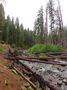 Ohanapecosh Cpgr  (Mt  Rainier NP, WA) (17)