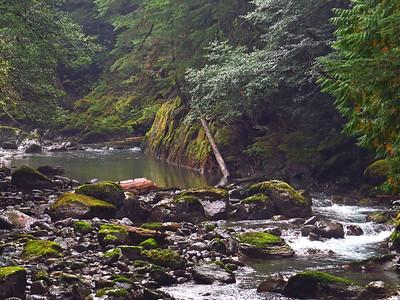 Ohanapecosh Cpgr  (Mt  Rainier NP, WA) (14)