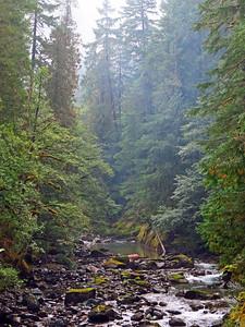 Ohanapecosh Cpgr  (Mt  Rainier NP, WA) (11)