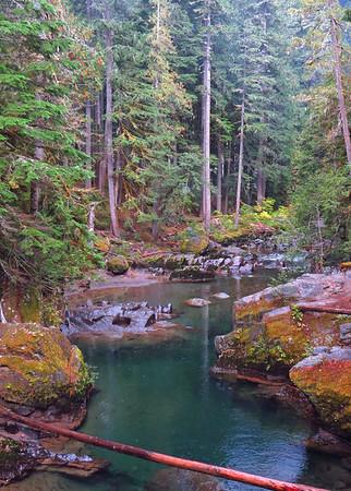 Ohanapecosh Cpgr  (Mt  Rainier NP, WA) (2)