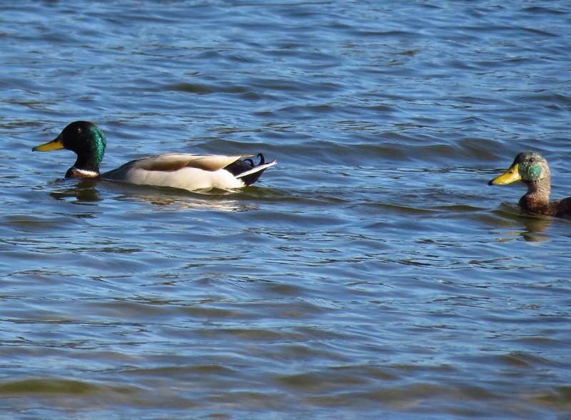 White Oak Creek Park, Eufaula, AL (8)