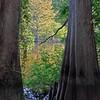 White River NWR, AR (10)
