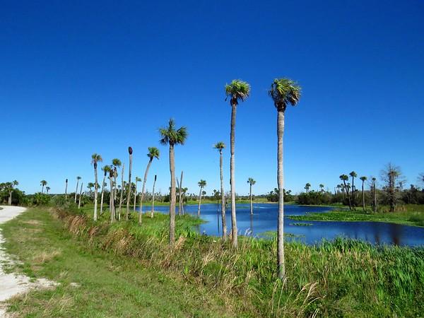 Orlando Wetlands Park, Orlando, FL (4)