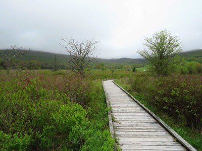 Canaan Valley SP, WV (8)