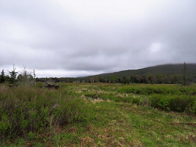 Canaan Valley SP, WV (7)