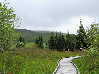 Canaan Valley SP, WV (11)
