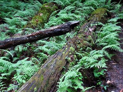 Koomer Ridge Cpgr , KY (11)