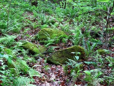 Koomer Ridge Cpgr , KY (8)