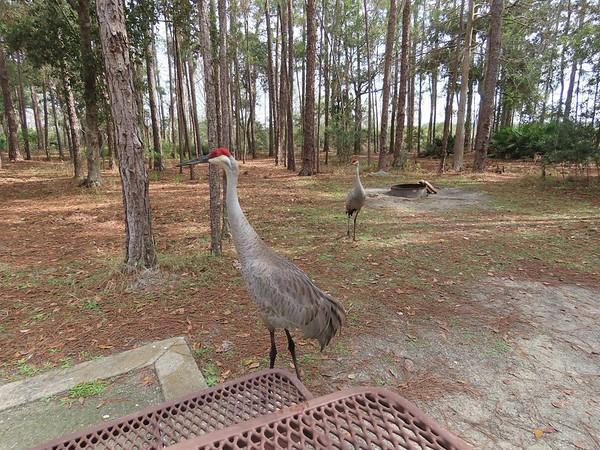 Moss Park, Orlando, FL (15)