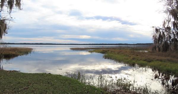 Ocean Pond Cpgr , Osceola NF, FL (2)