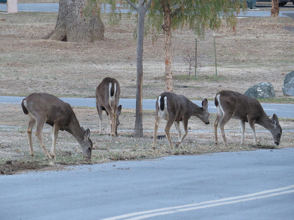 Coyote Lake-Harvey Bear Ranch, California (10)