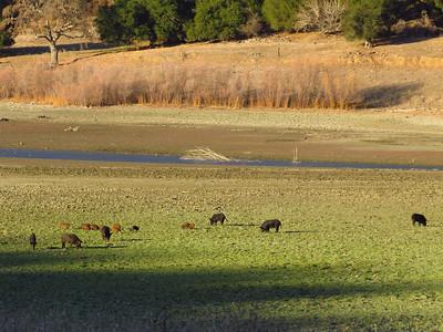 Coyote Lake-Harvey Bear Ranch, California (9)