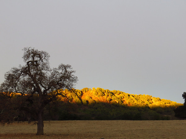 Coyote Lake-Harvey Bear Ranch, California (5)