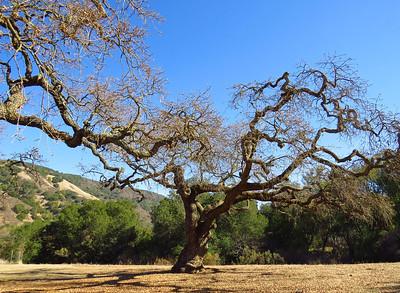 Coyote Lake-Harvey Bear Ranch, California (1)