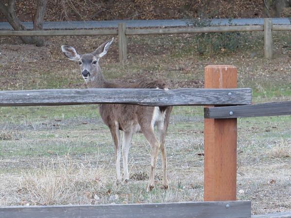 Coyote Lake-Harvey Bear Ranch, California (11)