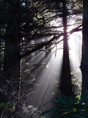 Carl G  Washburne State Park, Oregon (1)