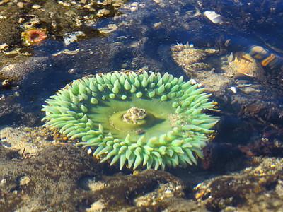 Carl G  Washburne State Park, Oregon (12)