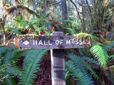 Hoh Rain Forest, Olympic Peninsula NP, WA (1)