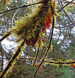 Hoh Rain Forest Olympic Peninsula NP, WA (4)