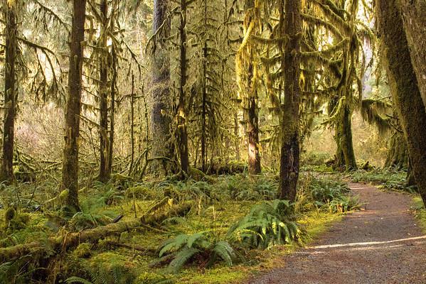 Hoh Rain Forest Olympic Peninsula NP, WA (11)