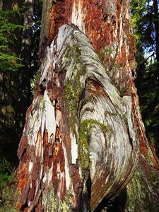 Hoh Rain Forest Olympic Peninsula NP, WA (3)