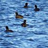 Tule Lake NWR (41)