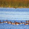 Tule Lake NWR (45)