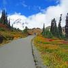 Paradise Jackson Visitor Center (Mt  Rainier NP, WA (22)