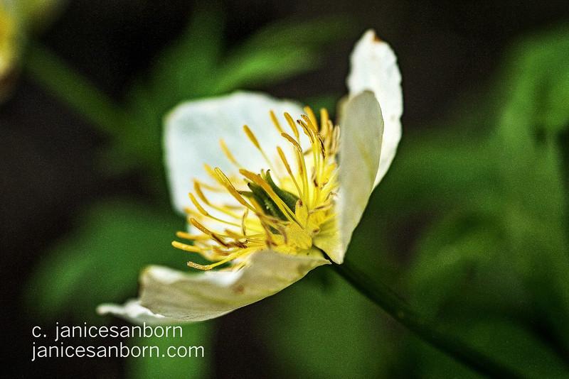 Flowers018
