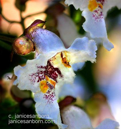 Flowers021