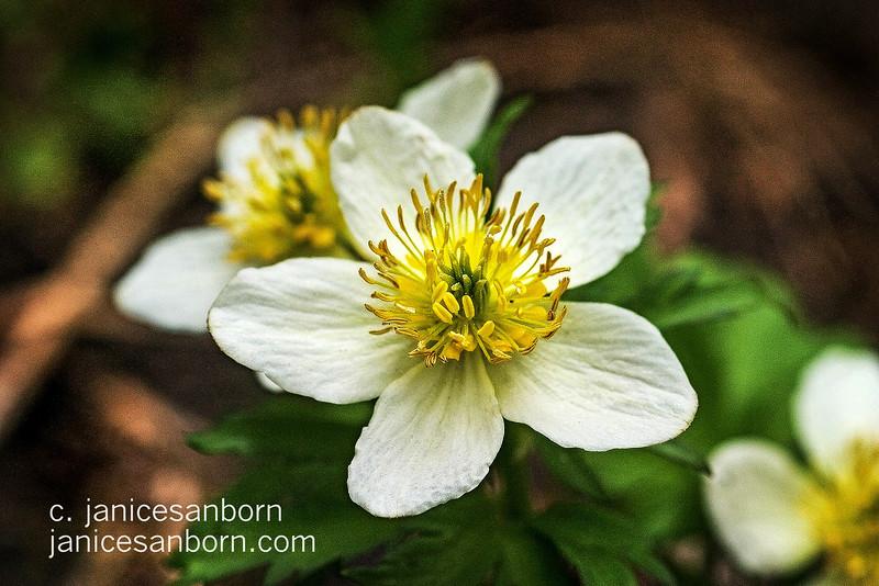 Flowers016