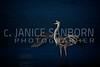 Great Blue Heron 193