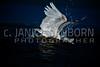 Great Blue Heron 192