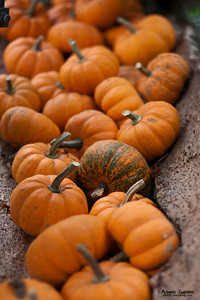 Autumn Squash (Parc de la tête d'or, Lyon, France)