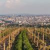 Wineries and Vineyards in Vienna