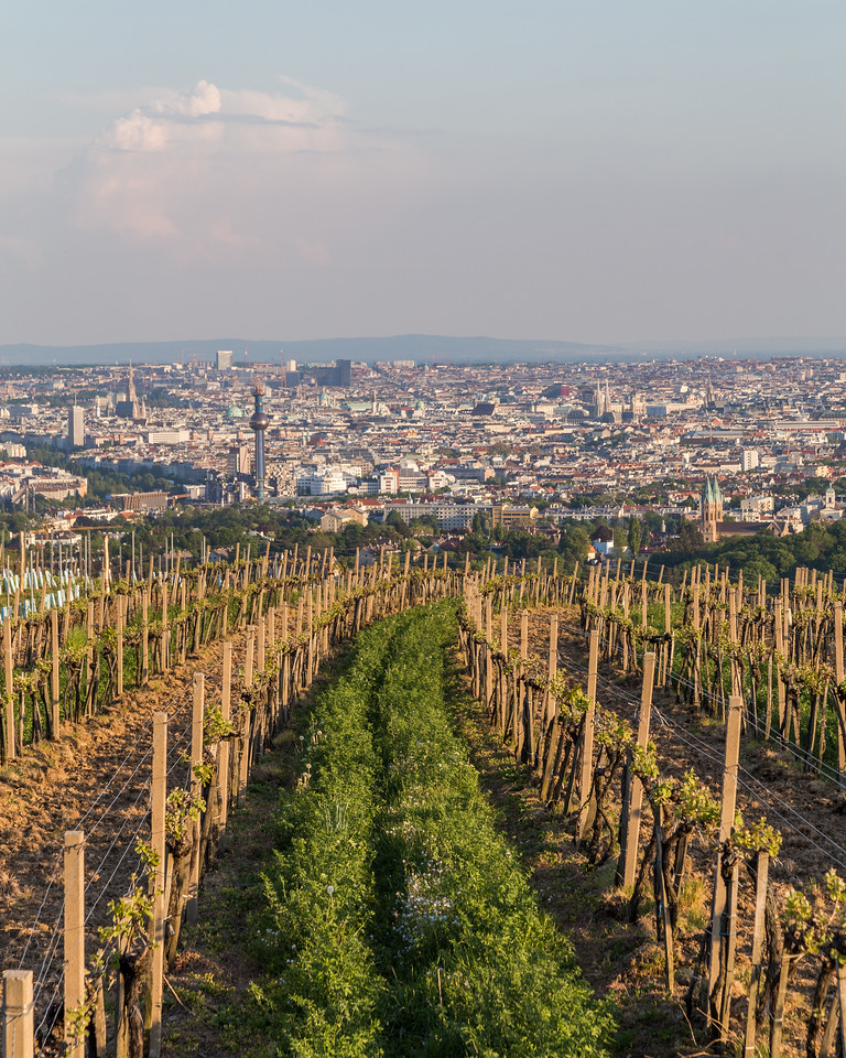 Wineries and Vineyards in Vienna
