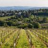 Wine Grape Plantations and Kahlenberg